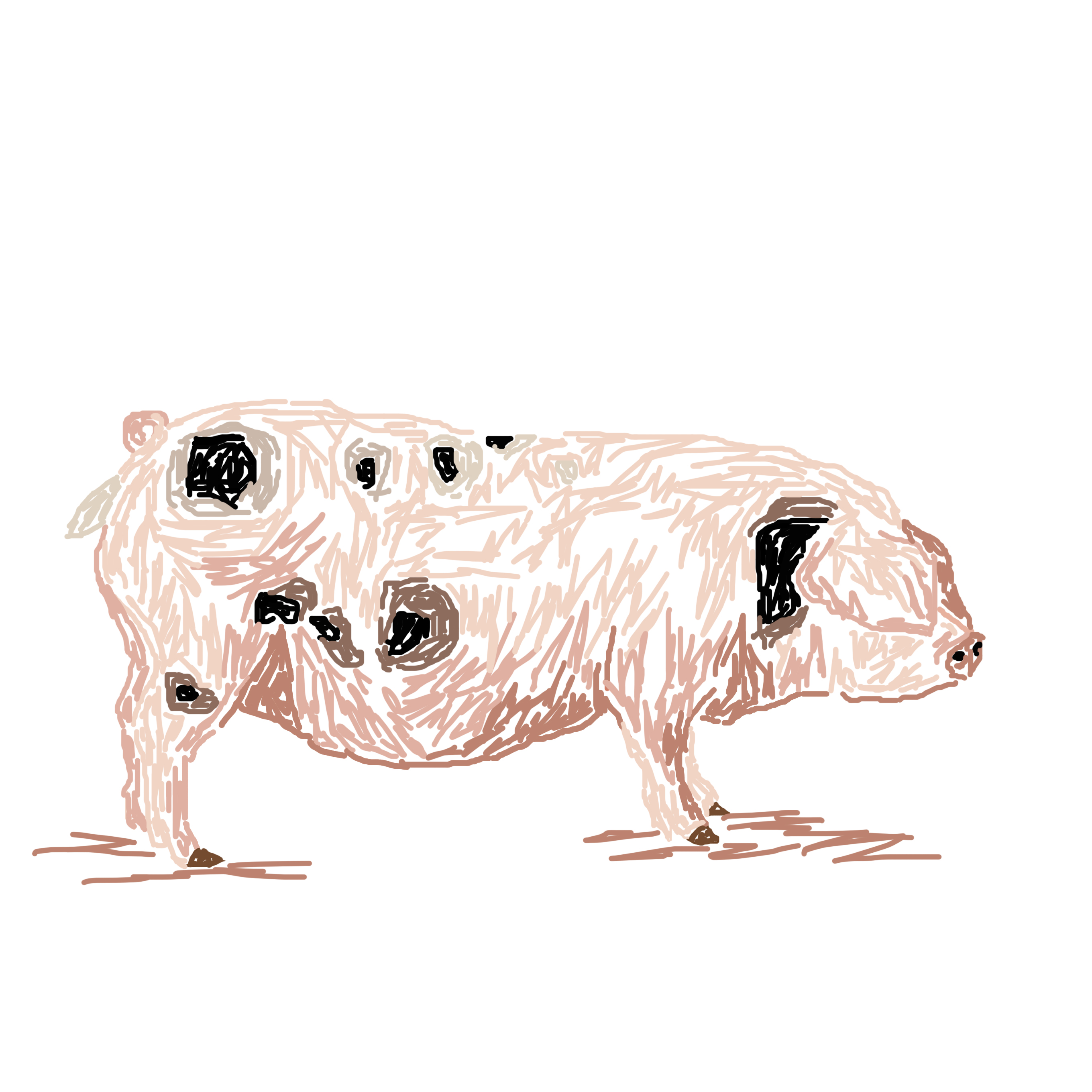 Pig and pheasant card design simon andrew designs greetings card pig card greetings card kristyandbryce Gallery
